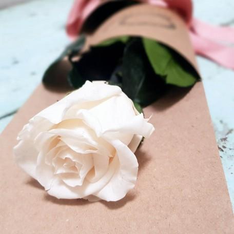 Rosa blanco roto