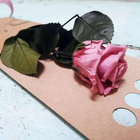 Rosa rosa claro